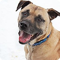 Adopt A Pet :: Rexx - New Boston, MI
