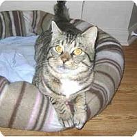Adopt A Pet :: Isaiah - Colmar, PA