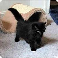 Adopt A Pet :: Ta-li - Alexandria, VA