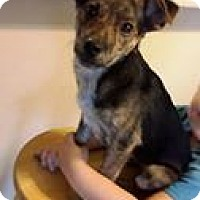 Adopt A Pet :: Buddy - Gig Harbor, WA