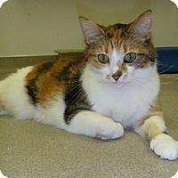 Adopt A Pet :: Lulu - Hamburg, NY