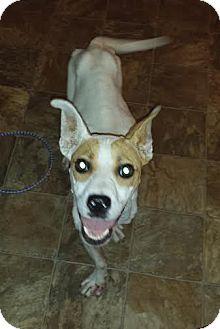 Florence Sc Dog Adoption