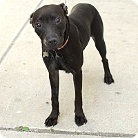 Adopt A Pet :: Mira-Pending! - Detroit, MI