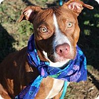Adopt A Pet :: SKIPPY (foster care) - Philadelphia, PA