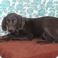 Adopt A Pet :: Autumn - Starkville, MS