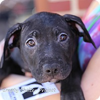 Adopt A Pet :: Dakota - Manassas, VA