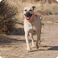 Adopt A Pet :: Atticus - Washoe Valley, NV