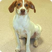 Adopt A Pet :: Jill - Lufkin, TX