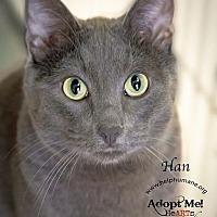 Adopt A Pet :: Han - Belton, MO