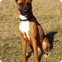 Adopt A Pet :: MALTA - New Cumberland, WV