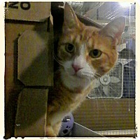 Adopt A Pet :: Santini - Trevose, PA