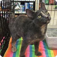 Adopt A Pet :: Judi - Gilbert, AZ