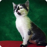 Adopt A Pet :: Esther - New Castle, PA
