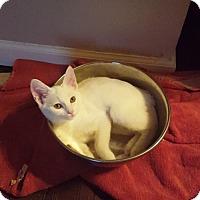 Adopt A Pet :: Juju Be **Ringworm Camp ** - Glendale, AZ