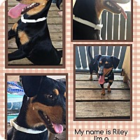Adopt A Pet :: Riley - springtown, TX
