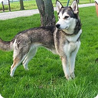 Adopt A Pet :: Ivy - Cambridge, ON
