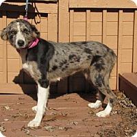 Adopt A Pet :: Cutie - Springfield, VA
