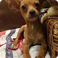 Adopt A Pet :: Stitch - Santa Ana, CA
