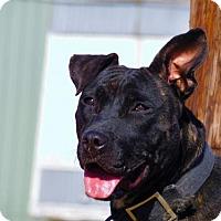 Adopt A Pet :: Iris-100614j - Tupelo, MS
