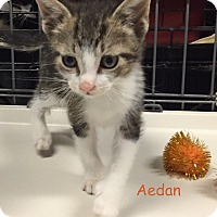 Adopt A Pet :: AEDAN - Cliffside Park, NJ
