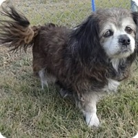 Adopt A Pet :: Lil Lady - Olive Branch, MS