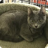 Adopt A Pet :: Brenda - Redding, CA