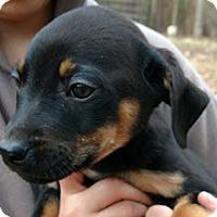 Adopt A Pet :: McFadden - McKinney, TX