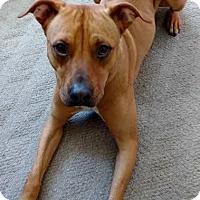 Adopt A Pet :: Danny Boy - Grafton, WI