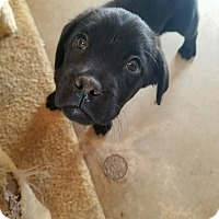 Adopt A Pet :: Lagatha - Harmony, Glocester, RI