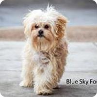 Adopt A Pet :: Benny - Apple Valley, UT