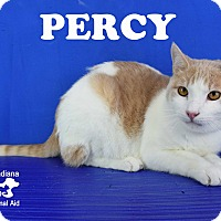 Adopt A Pet :: Percy - Carencro, LA