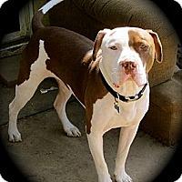 Adopt A Pet :: Parker - Cypress, CA