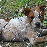 Adopt A Pet :: Target - Jarrettsville, MD