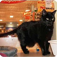 Adopt A Pet :: Night - Colmar, PA