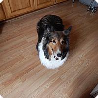 Adopt A Pet :: Cassie (WV) - Alderson, WV