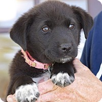 Adopt A Pet :: Faith - Hagerstown, MD