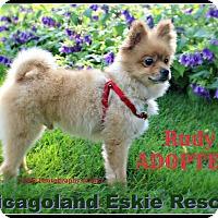 Adopt A Pet :: Rudy - Elmhurst, IL