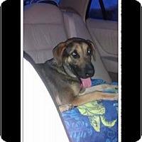 Adopt A Pet :: Juliet - Surprise, AZ