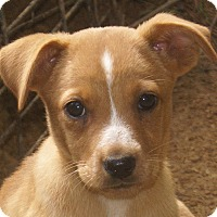 Adopt A Pet :: Candy - Spring Valley, NY