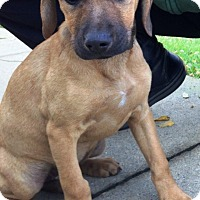 Adopt A Pet :: Embry - Pleasant Plain, OH
