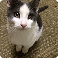 Adopt A Pet :: BuddyHolly - Monroe, GA