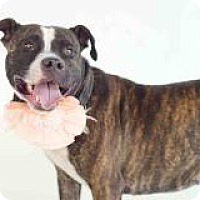 Adopt A Pet :: Kelly - New Smyrna Beach, FL