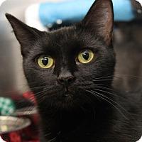 Adopt A Pet :: Ebony - Orland Park, IL