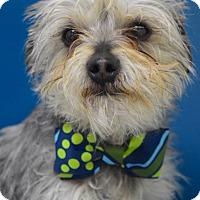 Adopt A Pet :: Anakin - Dublin, CA