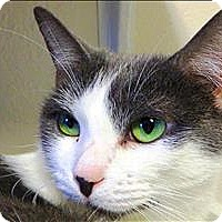 Adopt A Pet :: Taylor - Sherwood, OR