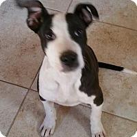 Adopt A Pet :: Kimba - Alta Loma, CA