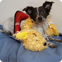 Adopt A Pet :: Nacho - Stockton, CA