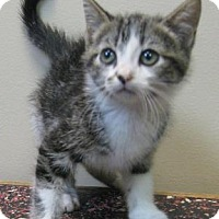 Adopt A Pet :: Heather - Gary, IN