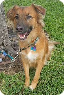 Shepherd (Unknown Type) Mix Dog for adoption in Royal Palm Beach, Florida - Sly