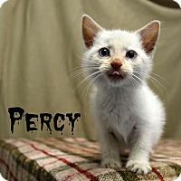 Adopt A Pet :: Percy - Melbourne, KY